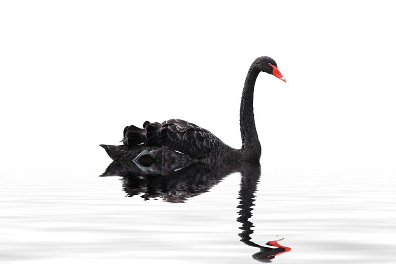 Cisne-negro-domestica-tu-economia-pb